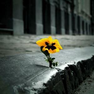 """""""In un giardino puoi guardare i fiori, o puoi guardare le erbacce"""" M.E. Erickson"""